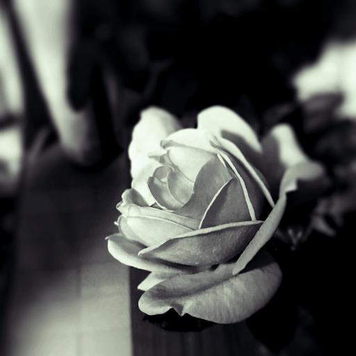 Rose Runner